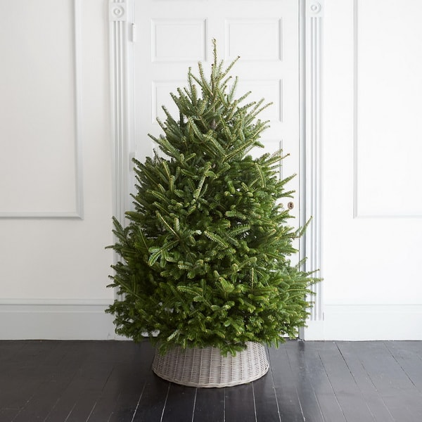 Christmas tree in basket without decoration