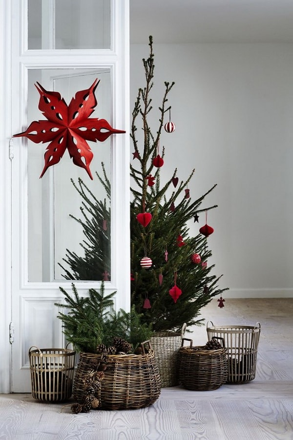 Christmas trees in baskets