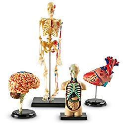 And these miniatures referring to the human body?  Undoubtedly a gift for a doctor that surprises anyone