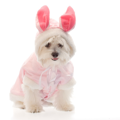 Pink and white doggie bunny costume