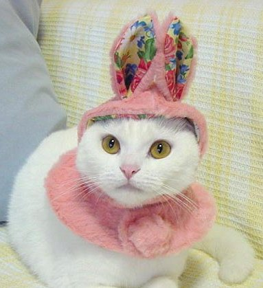Pink bunny costume for cat
