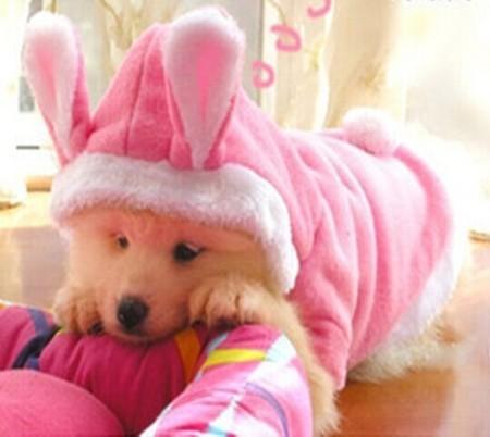 Plush doggie bunny costume