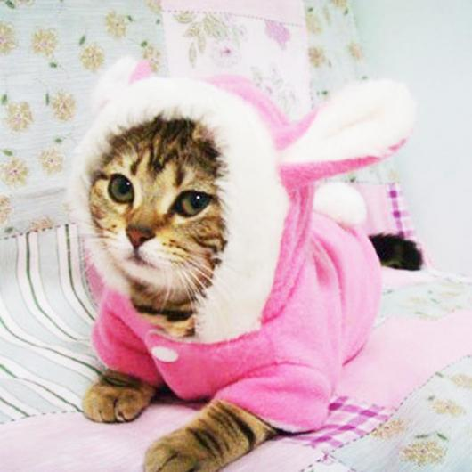 Bunny costume for cat