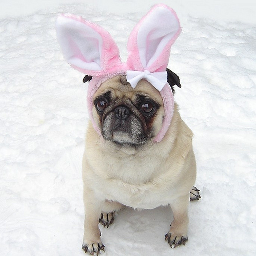 Doggie bunny costume