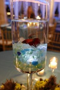 centerpiece for wedding with aquarium and fish